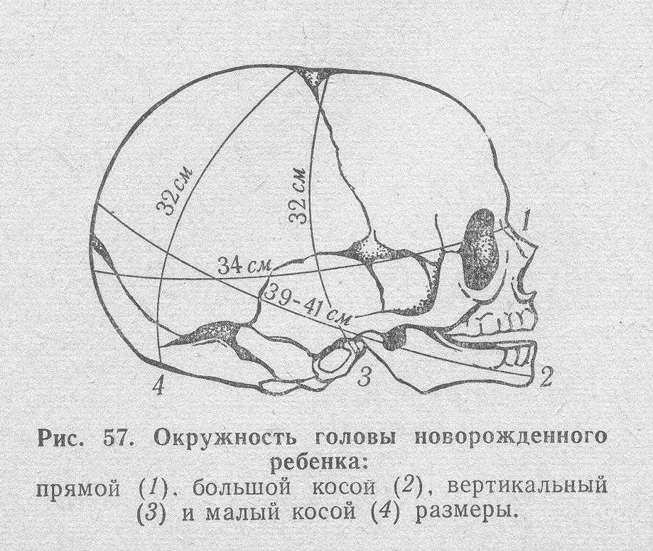 Схема окружности головы младенца в норме