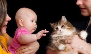 Знакомство домашнего животного с новорожденным