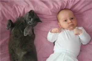 Новорожденный и кошка в доме