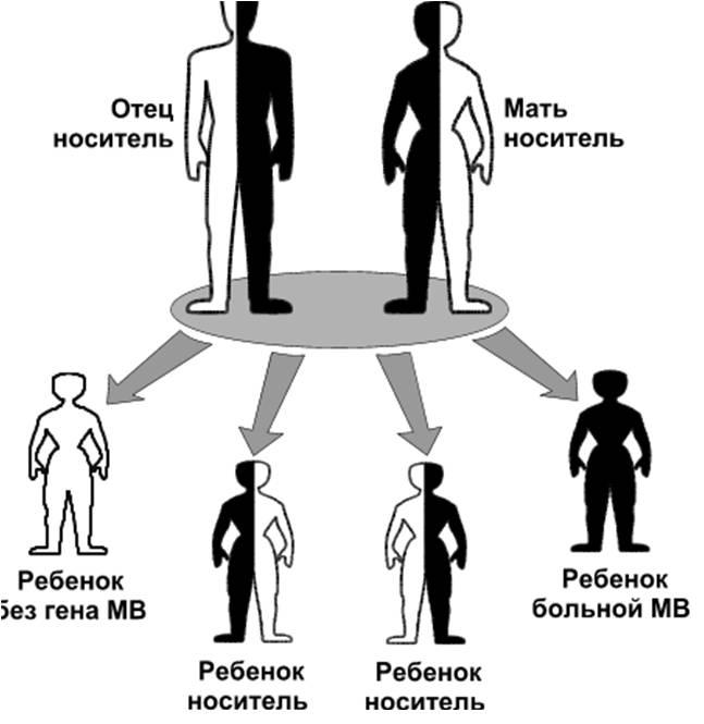 Вероятность заболевания муковисцидозом у детей