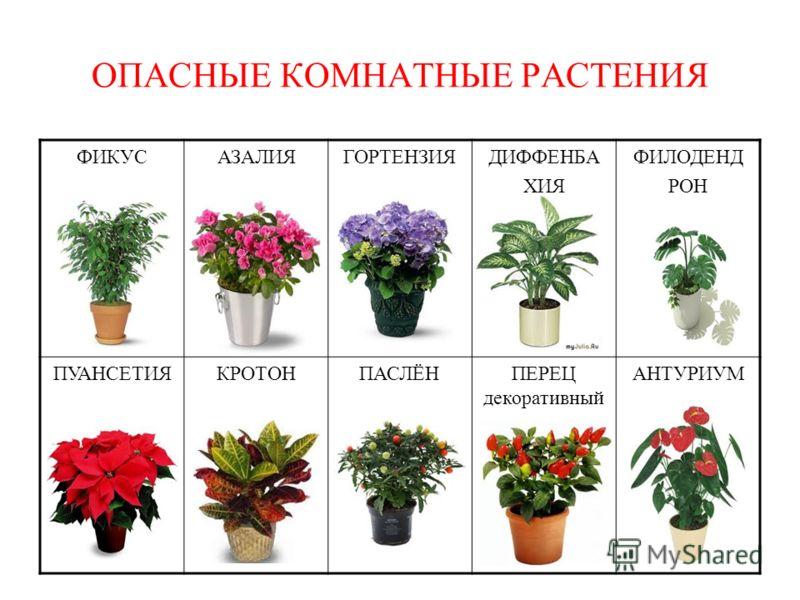 Комнатные цветы распространенные