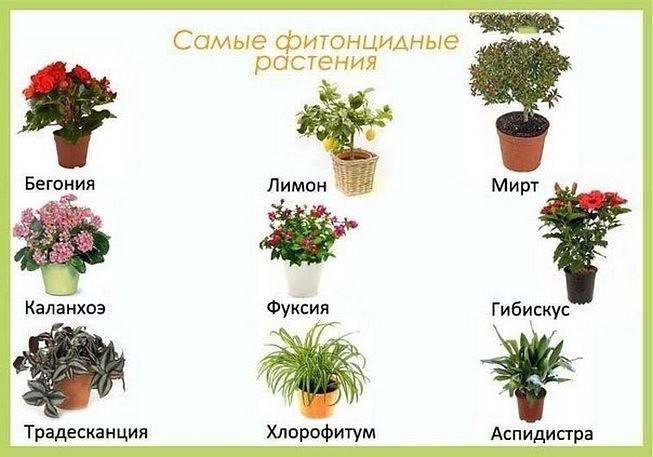 комнатные цветы для здоровья женщины