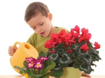 Уход за комнатными растениями в детской