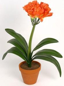 Ядовитое комнатное растение для новорожденного