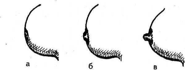 Необычные формы сосков фото 182-968