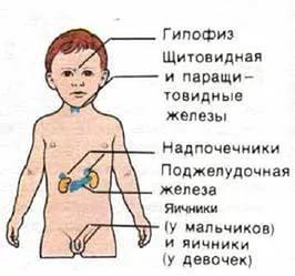 Эндокринные заболевания у новорожденных симптомы