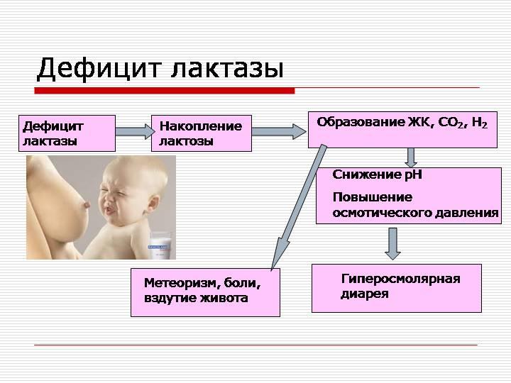 Расссмотрим схему, как происходит образование патологии лактазная недостаточность у грудничков