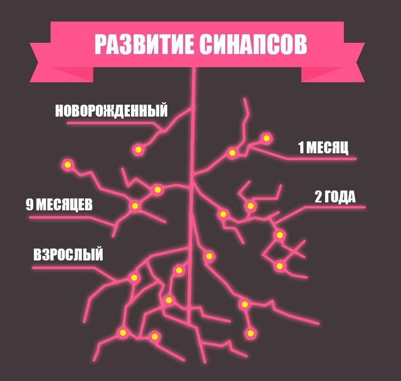 Развитие синапсов в мозге